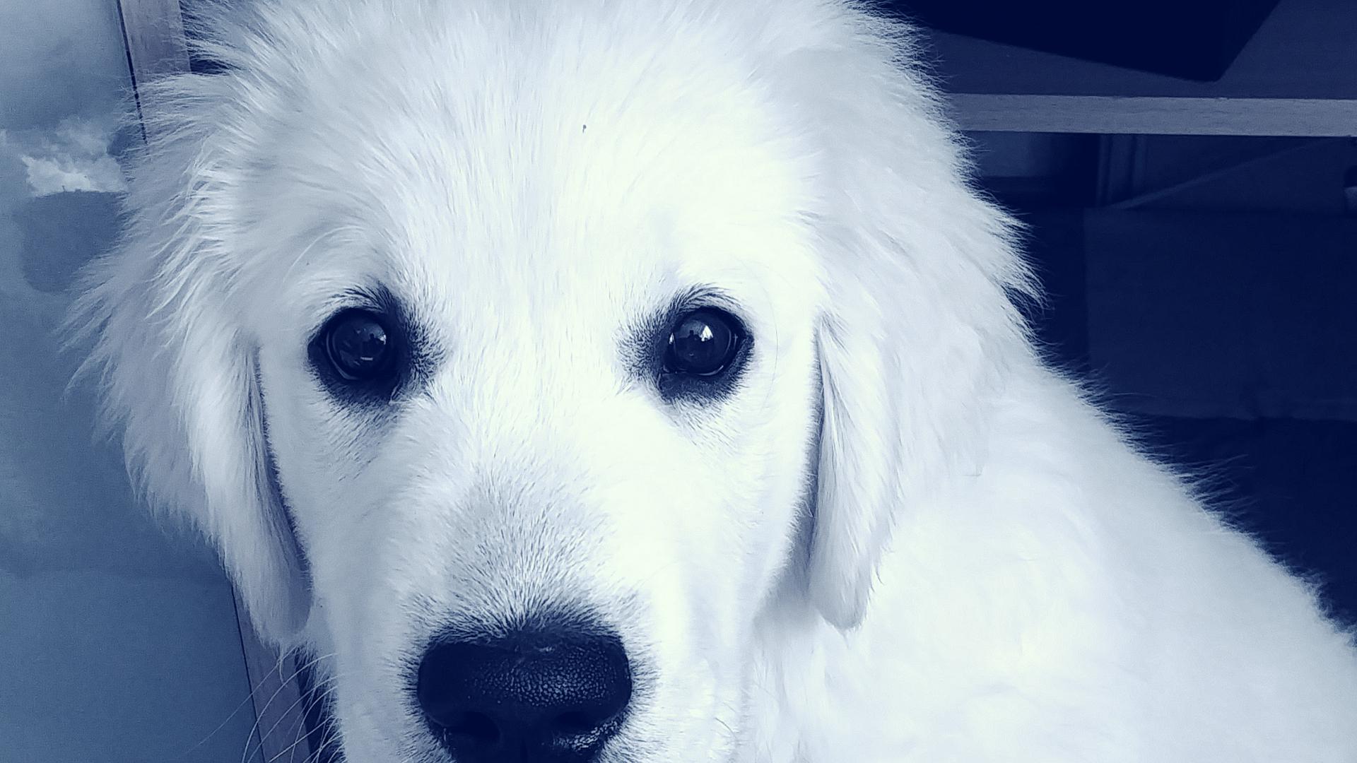 Bürohund - Seminar Hundehalter