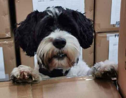Bürohund des Monats Dezember 2019 Anton