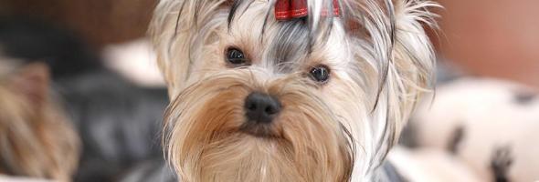 18.06.18 — Собака спасла многоквартирный жилой дом в Свердловской области от взрыва газа