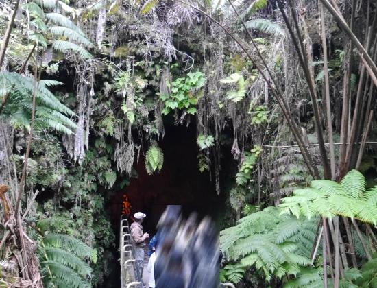 ジャングルの洞窟