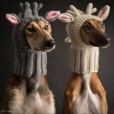 動物×編み物 ハロウィン仕様もあるよ!可愛いニット帽33選