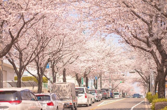 桜 花粉症