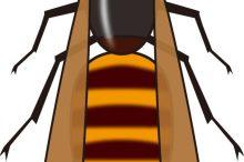 スズメバチ 刺されたら
