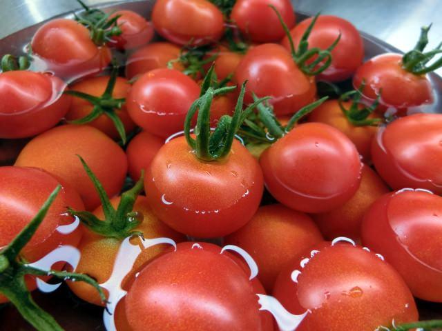 プチトマト 育て方