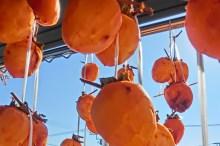干し柿 栄養 効能