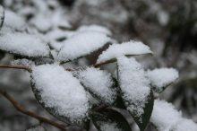 新雪の候 意味