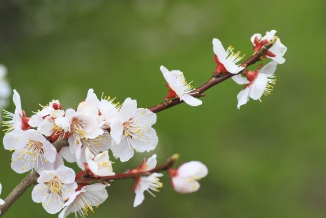 向春の候 意味