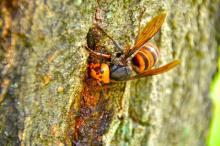 蜂毒 アナフィラキシー