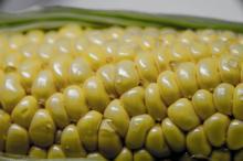 遺伝子組み換え食品