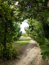 image of the garden and hill in our garden at Cortijo Las Viñas