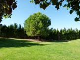 image of the lonesome pine and lawns in our garden at Cortijo Las Viñas