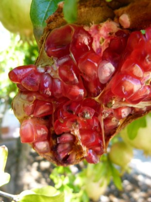 image of pomegranate i nour garden at Cortijo Las Viñas