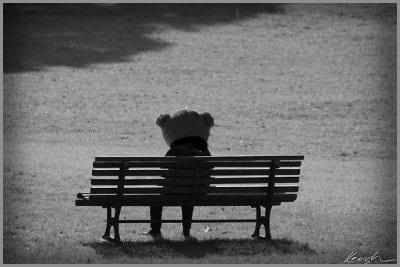Oso triste en silla de parque