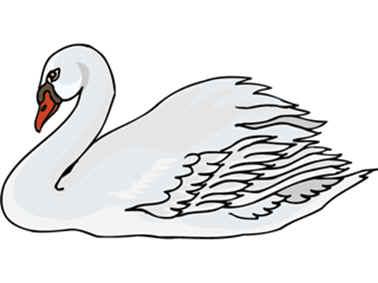 cisne hermoso