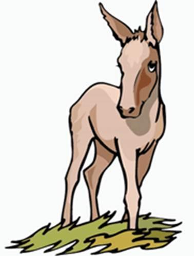 mula con dinero y la mula con carga de granos