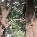 木にキノコ