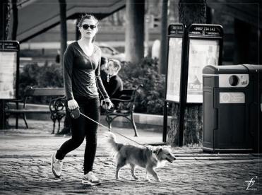 犬の散歩でストレス軽減