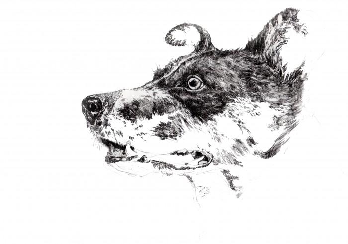 犬の細密画