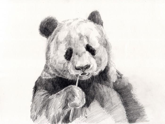 パンダのデッサン