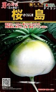 sakurajimadaikon001