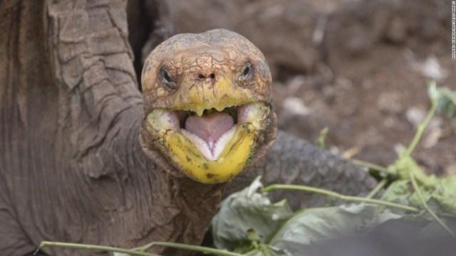 Esta tortuga tuvo tanto sexo que salvó a toda su especie