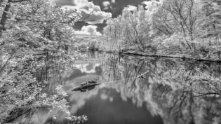 Schildkröten am Netzbachweiher