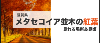 メタセコイア並木 紅葉