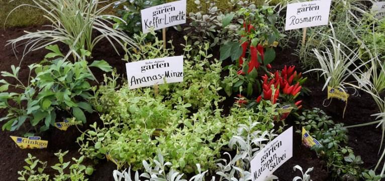 TAG DES GARTENS 2015 - Liebe deinen Garten - Kräutergarten - Grüneliebe-de
