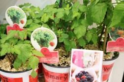 Messerückblick der Internationalen Pflanzenmesse Essen 2017