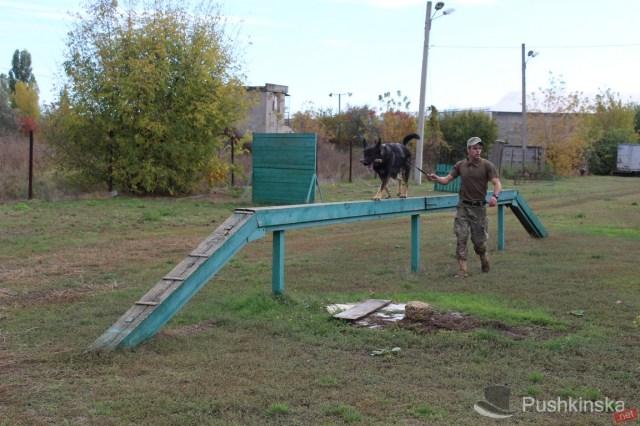 Всё о жизни хвостатых «генералов» и работе полицейских кинологов: экскурсия в одесский кинологический центр. Видео