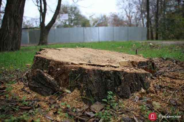 В Преображенском парке снесут 29 деревьев под огромную парковку и сделают сквозной проезд с Мечникова на Водопроводную. Фото