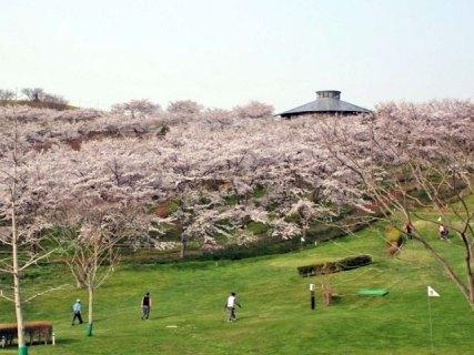 【4月11日(木)〜5/6(月)】加護坊桜まつり|山頂からの360度パノラマは格別!!そのスケールは県内随一|夜桜は一段と美しさが増す。ライトアップ時間/18:30~22:00