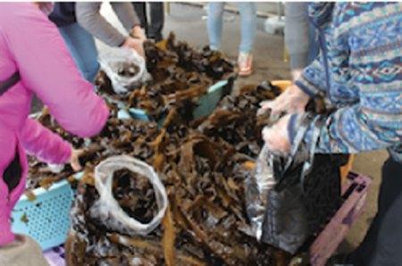 【3月22日(日)】第99回志津川湾牡蠣わかめまつり福興市|濃厚でクリーミーな味わいの牡蠣とわかめメニュー