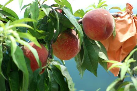 らでぃっしゅの桃|春を告げる仙人の果実