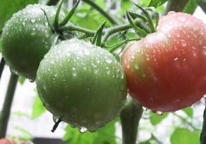 野菜宅配のメリット