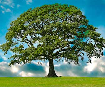 Soñar con un árbol