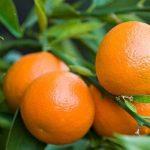 soñar con mandarinas