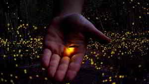 significado de soñar con luciérnagas