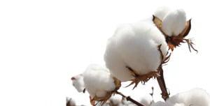 significado de soñar con algodón