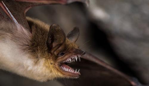 significado de soñar con murciélagos