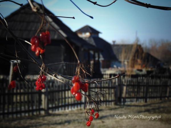 Наташа Миљевић: Бекство у руралне пределе – потрага за изгубљеним миром