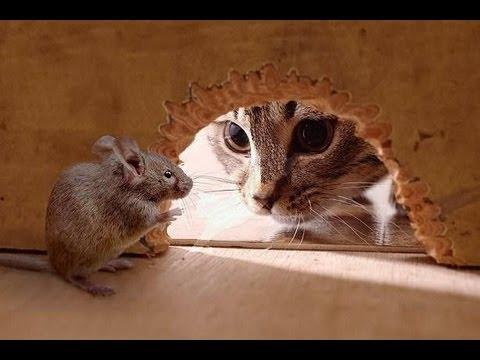 Мишеви и мачке