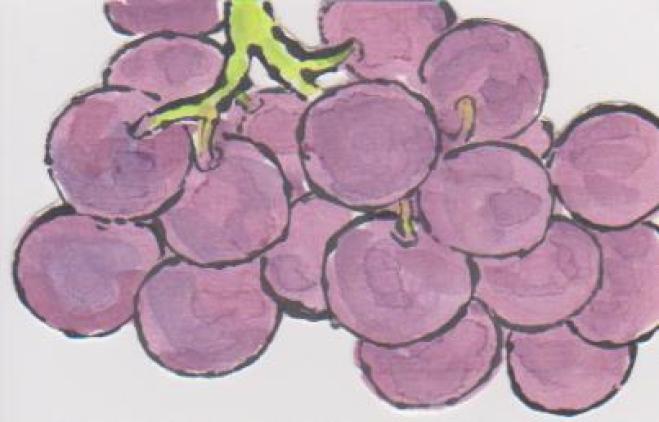 丸いブドウの絵ー14