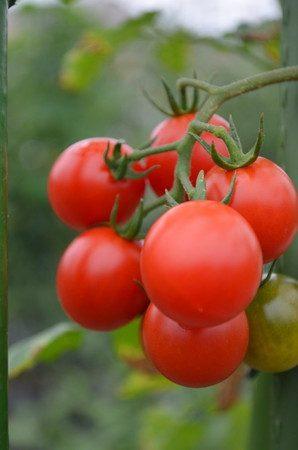 tomato2016-03