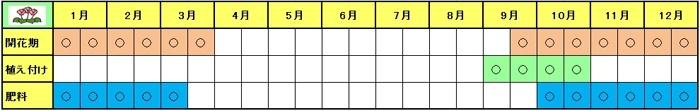 Cyclamen-Schedule