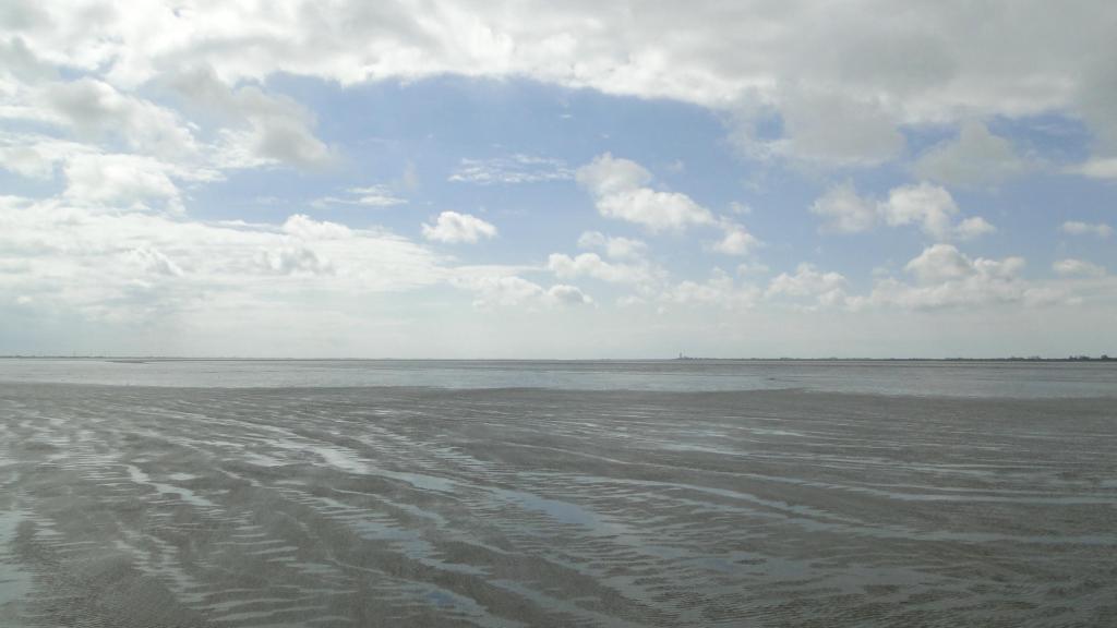Husum atrakcja turystyczna Północnych Niemiec - Wattowe Morze Północne