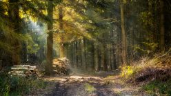 Langeland 2015 Vinter (25 of 30)