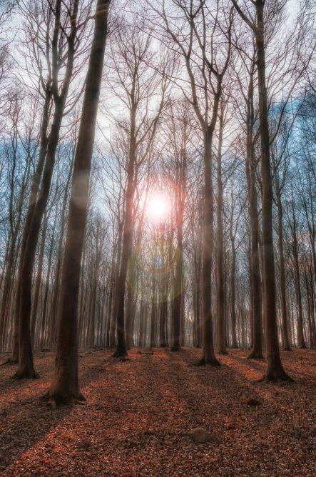 Langeland 2015 Vinter (26 of 30)