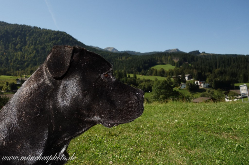 Shira in Achenkirch  MnchenPhotoMnchenPhoto