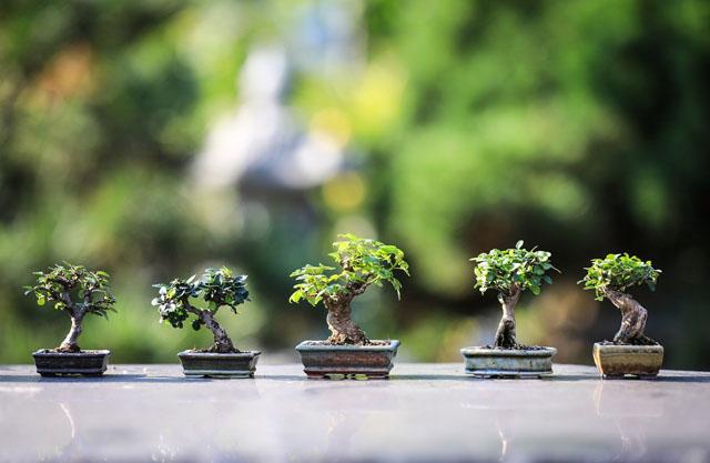 盆栽、家でできる趣味・習い事